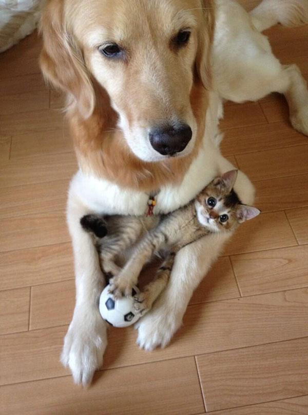 Представляю вам своего лучшего друга, партнера для игры, телохранителя и мою подушку