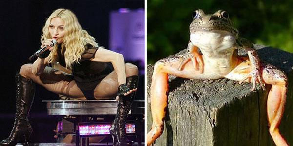 Гибкая Мадонна выглядит как лягушка