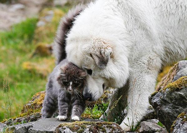 Милейшая кошечка и норвежский пес