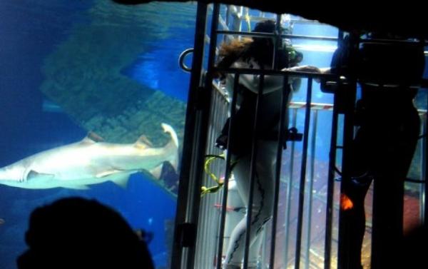 Жених и невеста в клетке, предназначенной для наблюдения за акулами