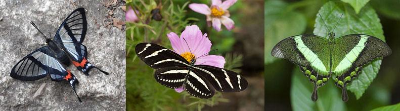 Самые красивые и необычные бабочки планеты