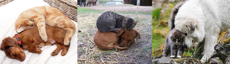 Дружба между котами и собаками