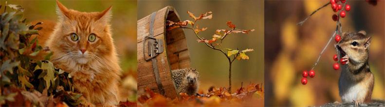Животные, любящие осень