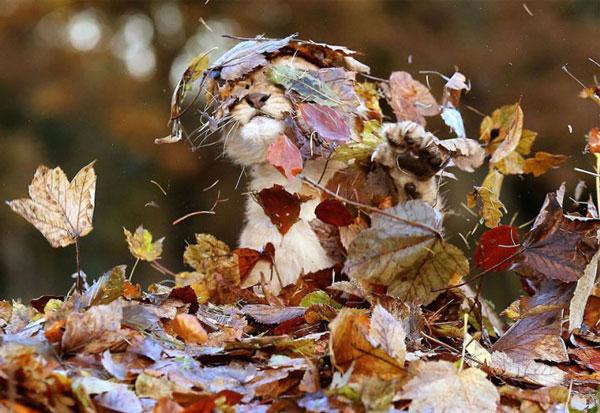 львенок в осенних листьях
