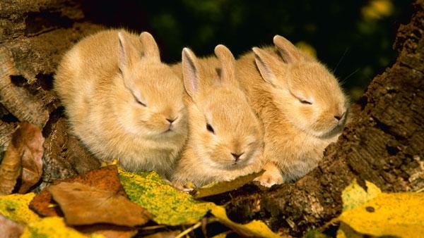спящие кролики