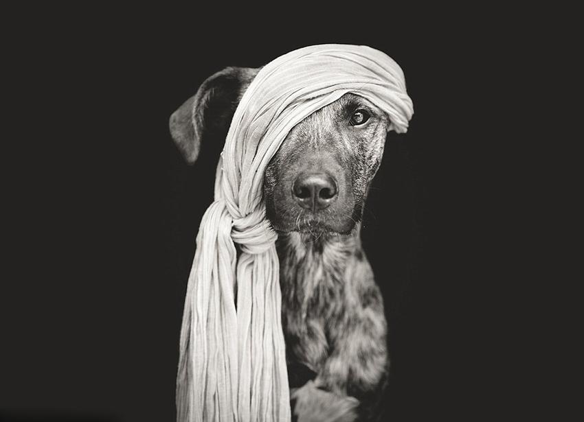 德摄影师为宠物狗拍自然个性萌照7