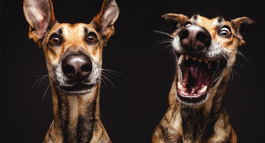 Эльке Фогельзанг профессиональный фотограф, создатель серии портретов собак