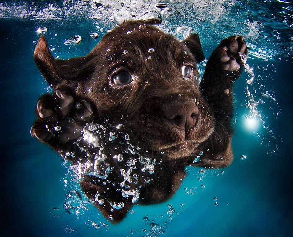 SHHenyache-podvodnoe-plavanie-7