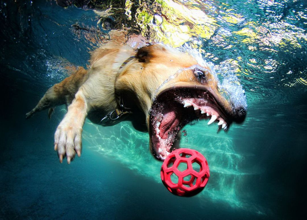 Underwate_dogs_3