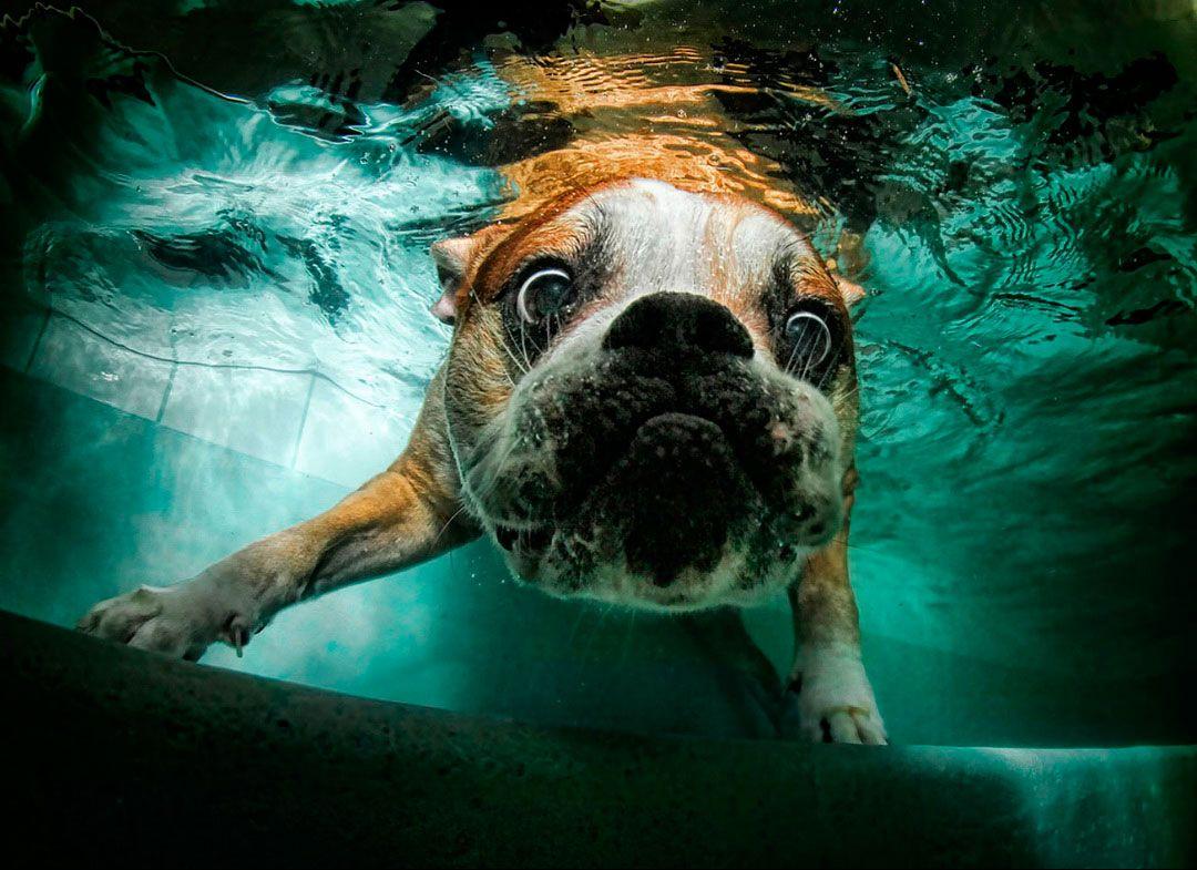 Underwate_dogs_7