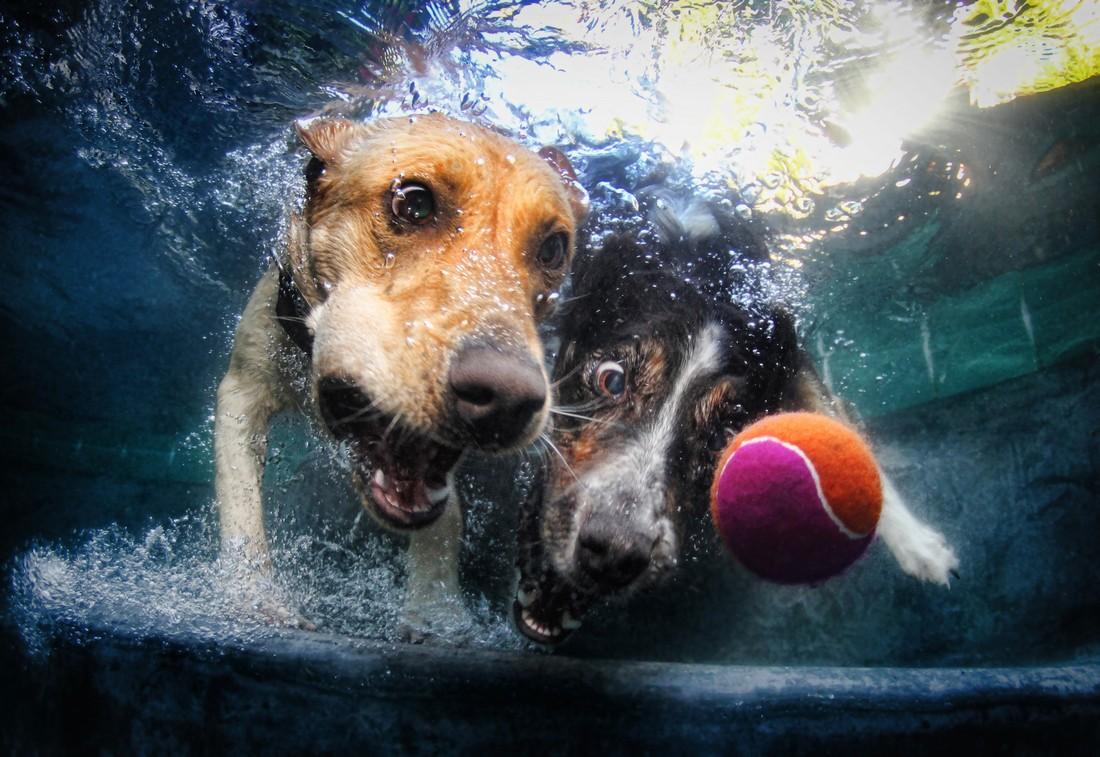 UnderwaterDogs