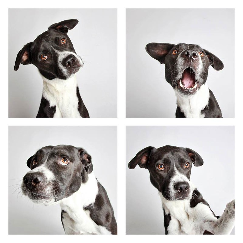 humane-society-of-utah-photo-booth-dog-pics-to-increase-adoption-17 (1)