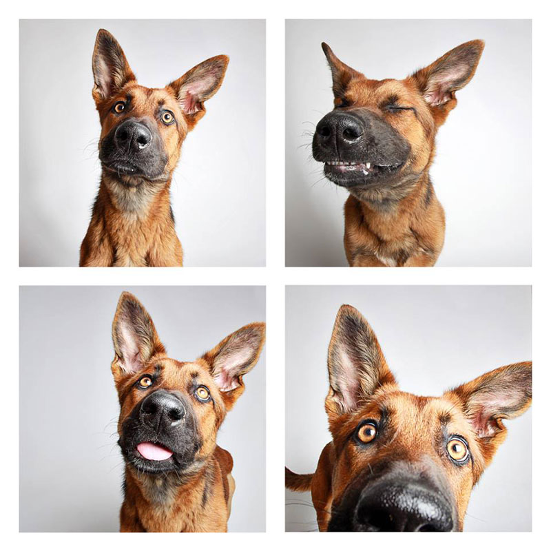 humane-society-of-utah-photo-booth-dog-pics-to-increase-adoption-18