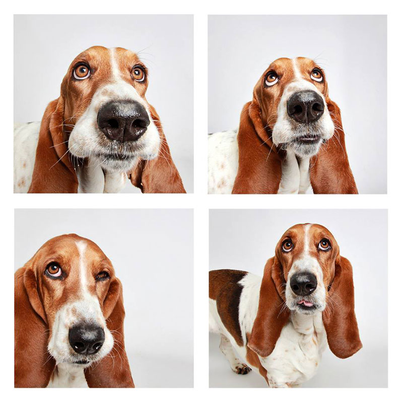 humane-society-of-utah-photo-booth-dog-pics-to-increase-adoption-22