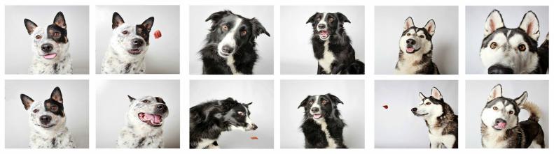 Эмоции собак в фотопроекте Photi Booth