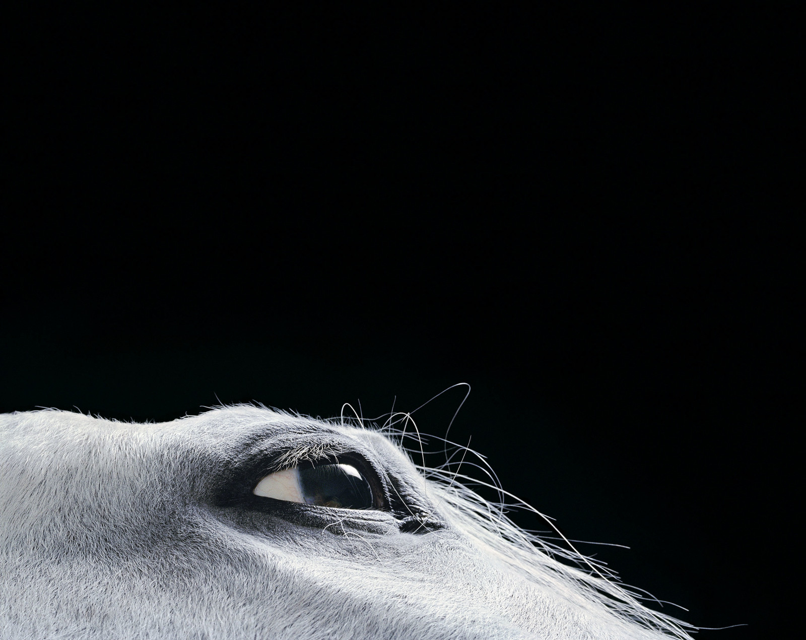 Horse_croc-1600x1270