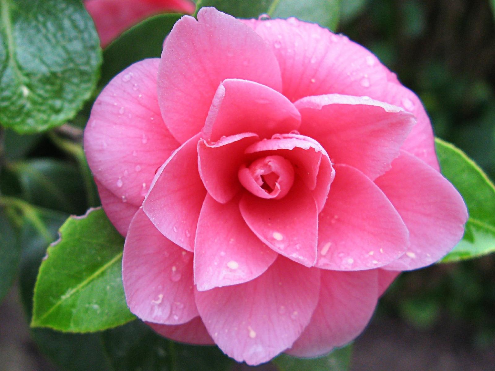 Цветок как лук фото