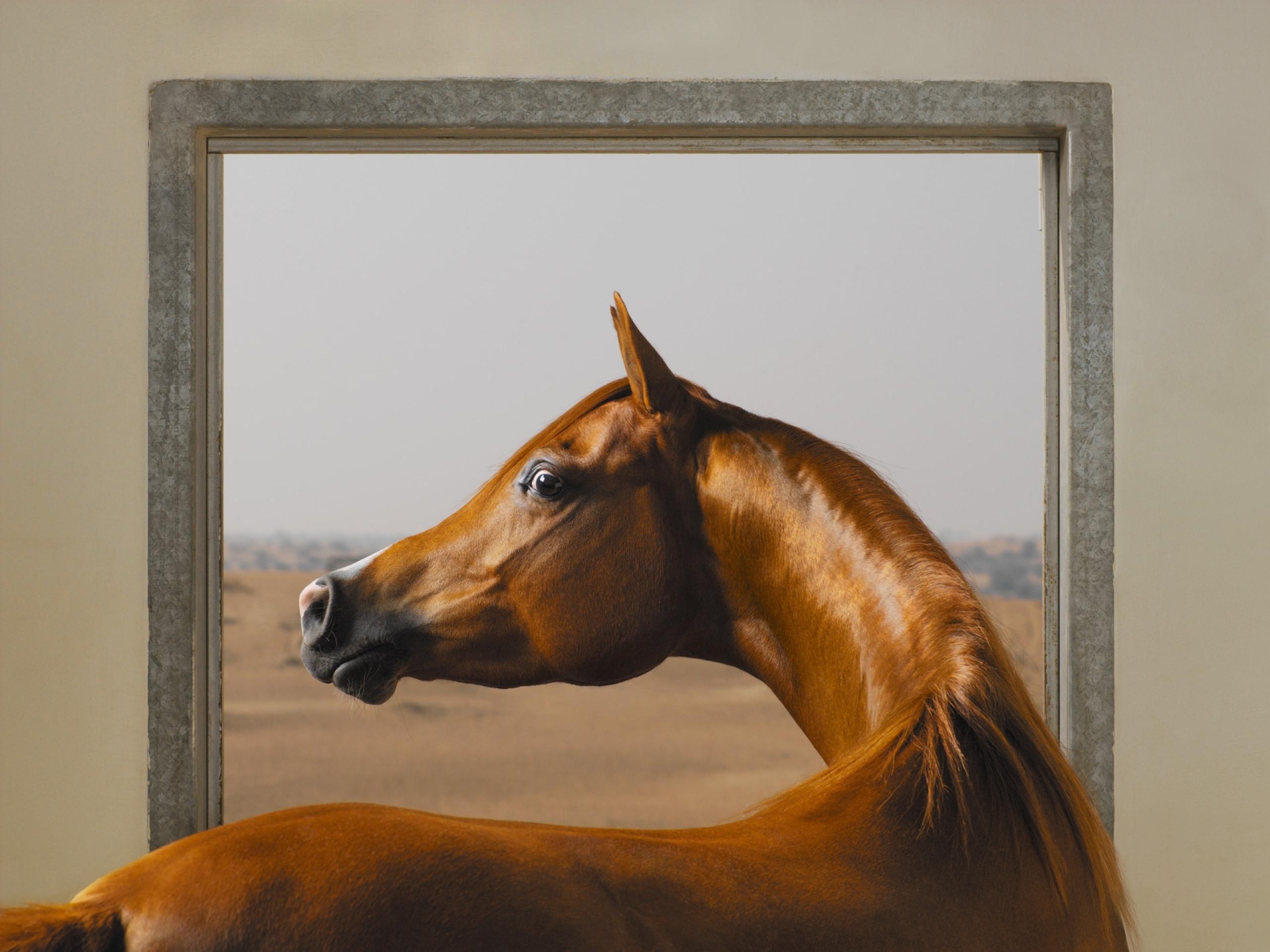 horses_1920x1521_wallpaper_Wallpaper_2560x1920_www.wall321.com