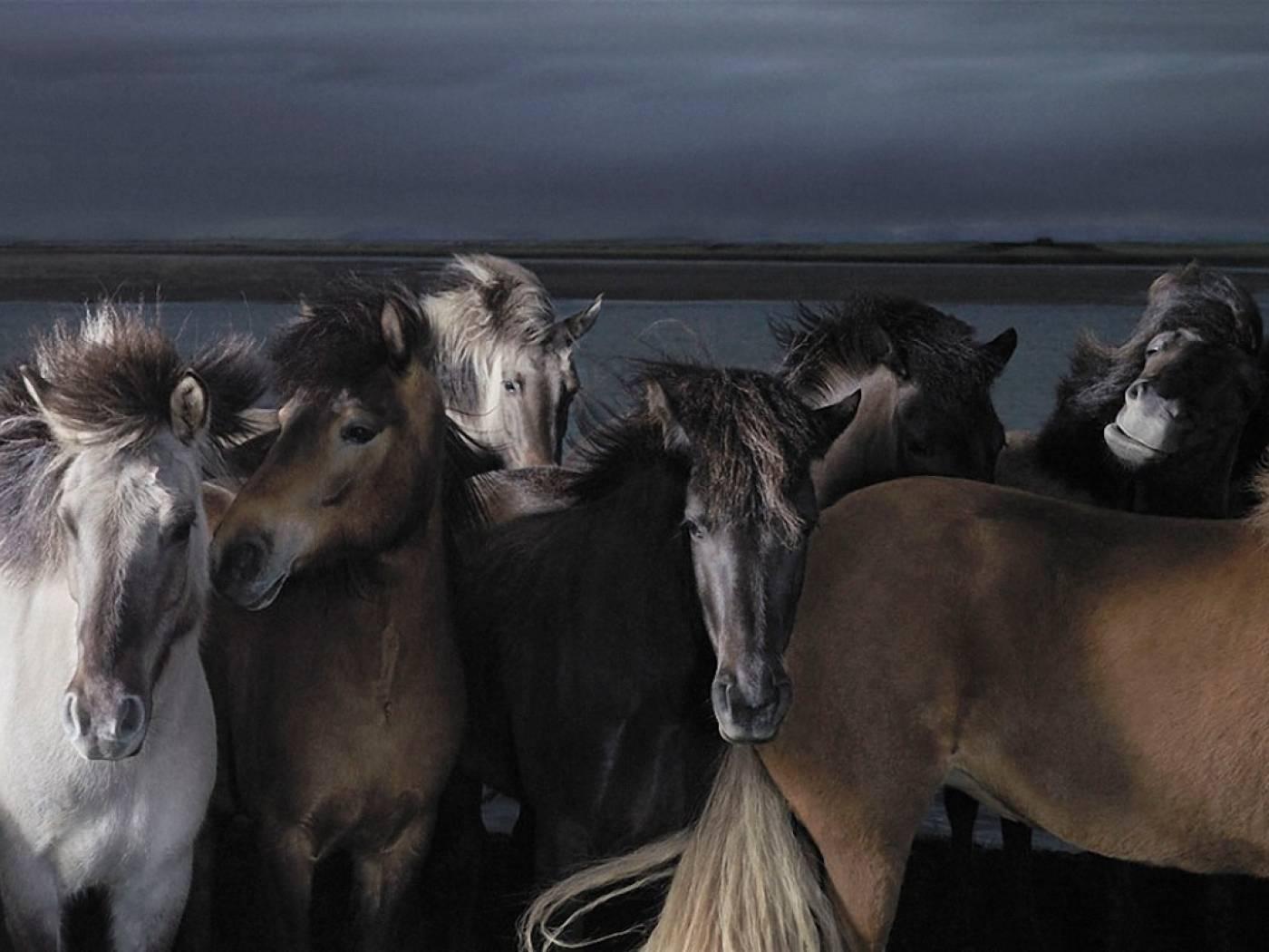 manada-de-caballos-a-la-orilla-de-una-laguna