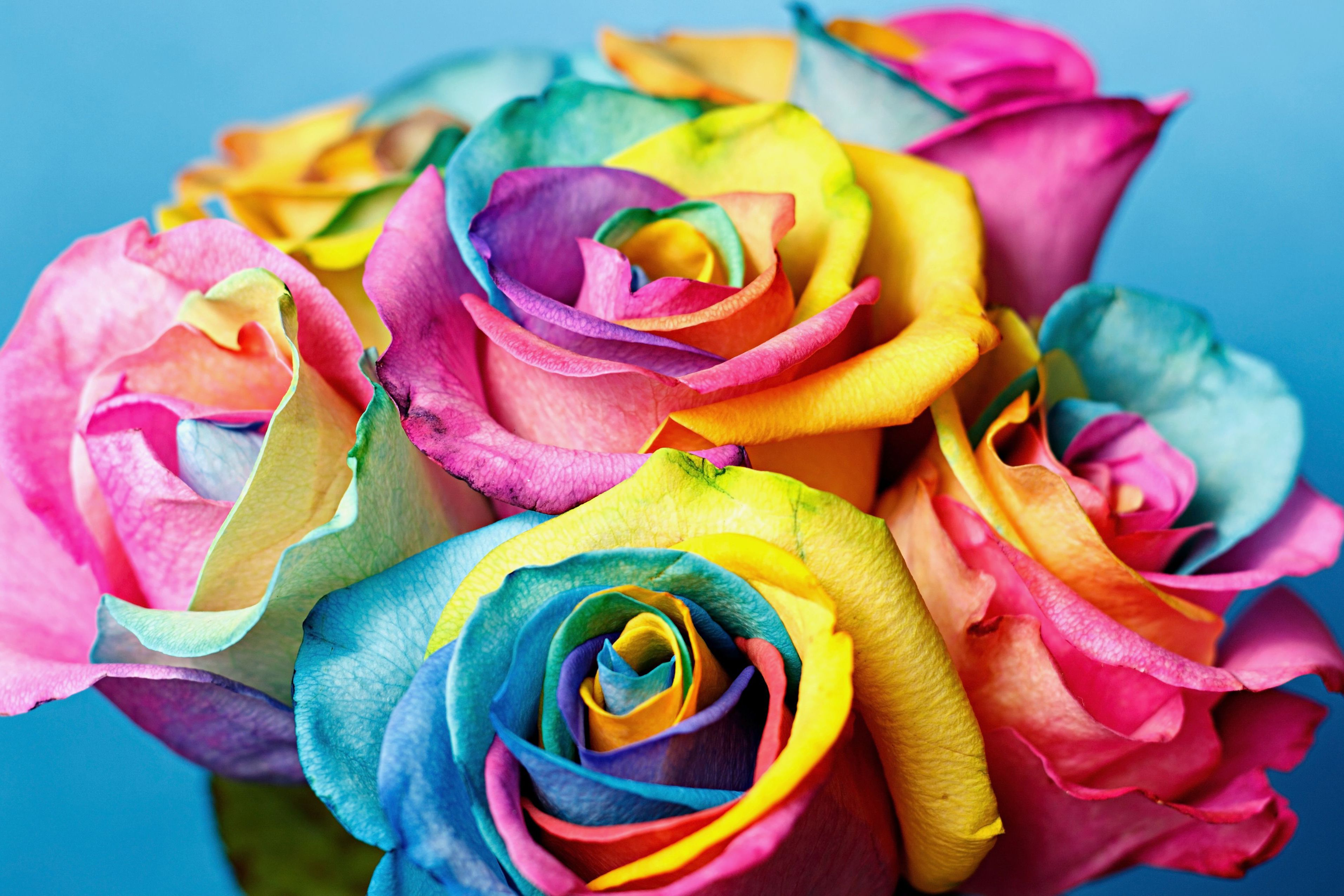 рад розы