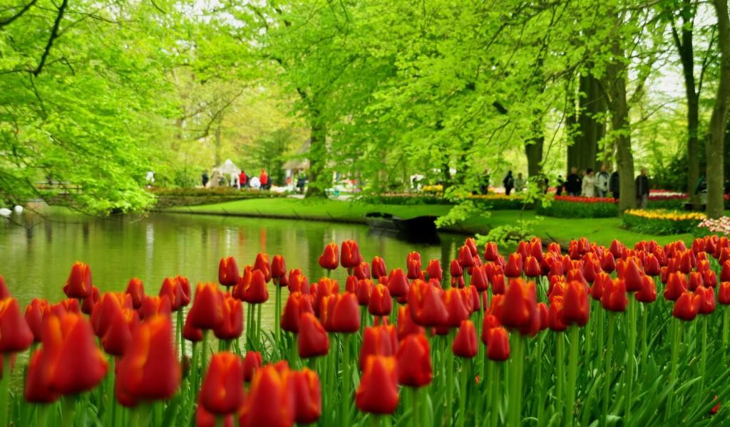 tulips-garden--3058tjhmgwi4wuttie34lm