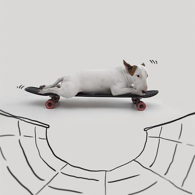 876005-650-1447964970-Jimmy-the-Bull-Terrier18__605