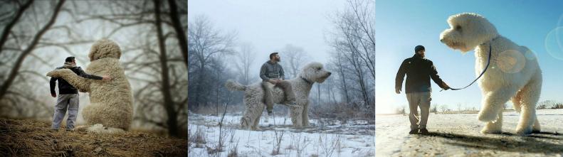 Фотографии гигантской собаки Джуджи созданные ее хозяином Крисом Клайном