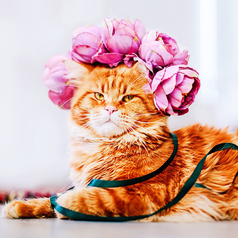 ginger-cat-photography-kotleta-cutlet-kristina-makeeva-hobopeeba-14