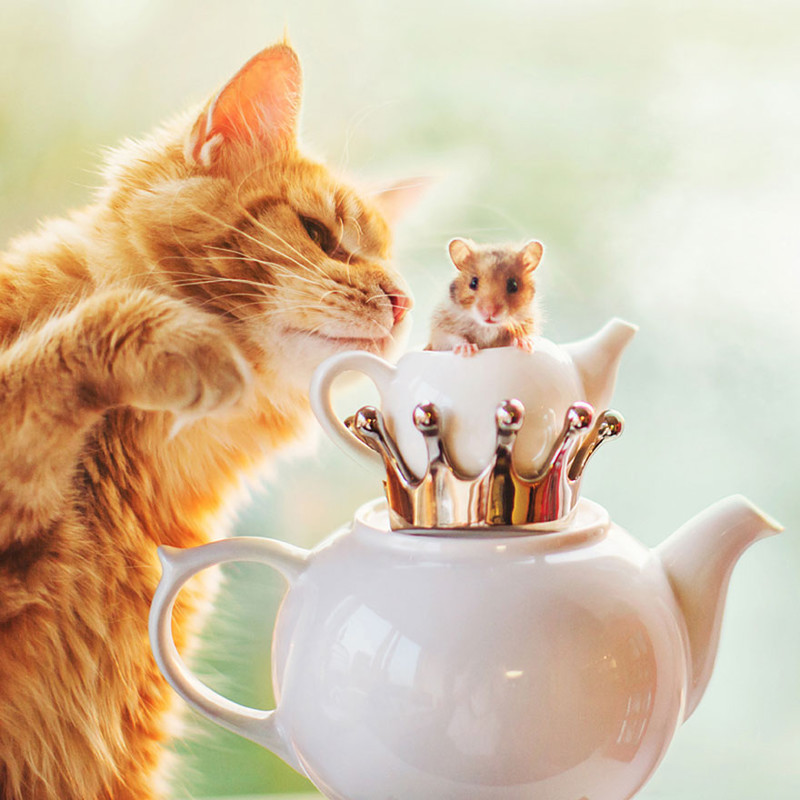 ginger-cat-photography-kotleta-cutlet-kristina-makeeva-hobopeeba-3