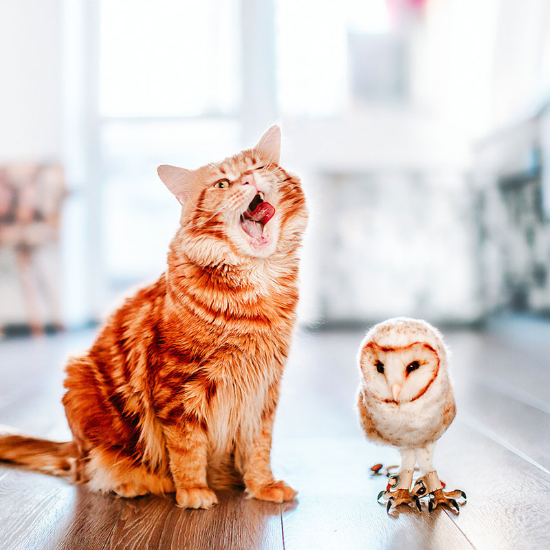 ginger-cat-photography-kotleta-cutlet-kristina-makeeva-hobopeeba-51