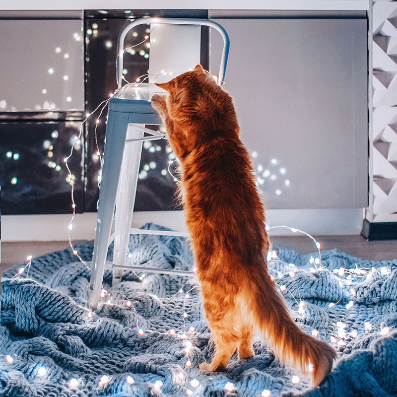 ginger-cat-photography-kotleta-cutlet-kristina-makeeva-hobopeeba-54