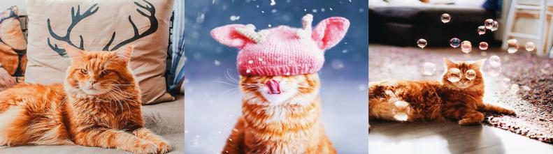 Фотографии из жизни кота Котлеты