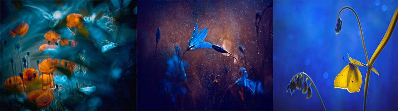 Сказочные фотографии макромира Магды Ваcичек
