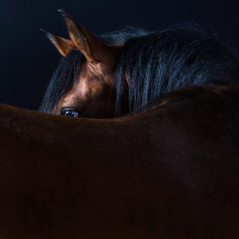 Animal-Robert-Bahou