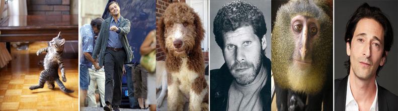 Фотографий знаменитостей и их смешные двойники животные