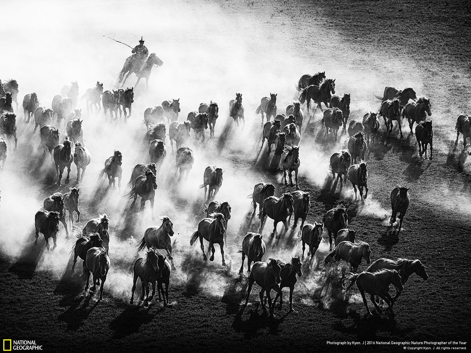 National Geographic Nature Photographer of the Year 2016