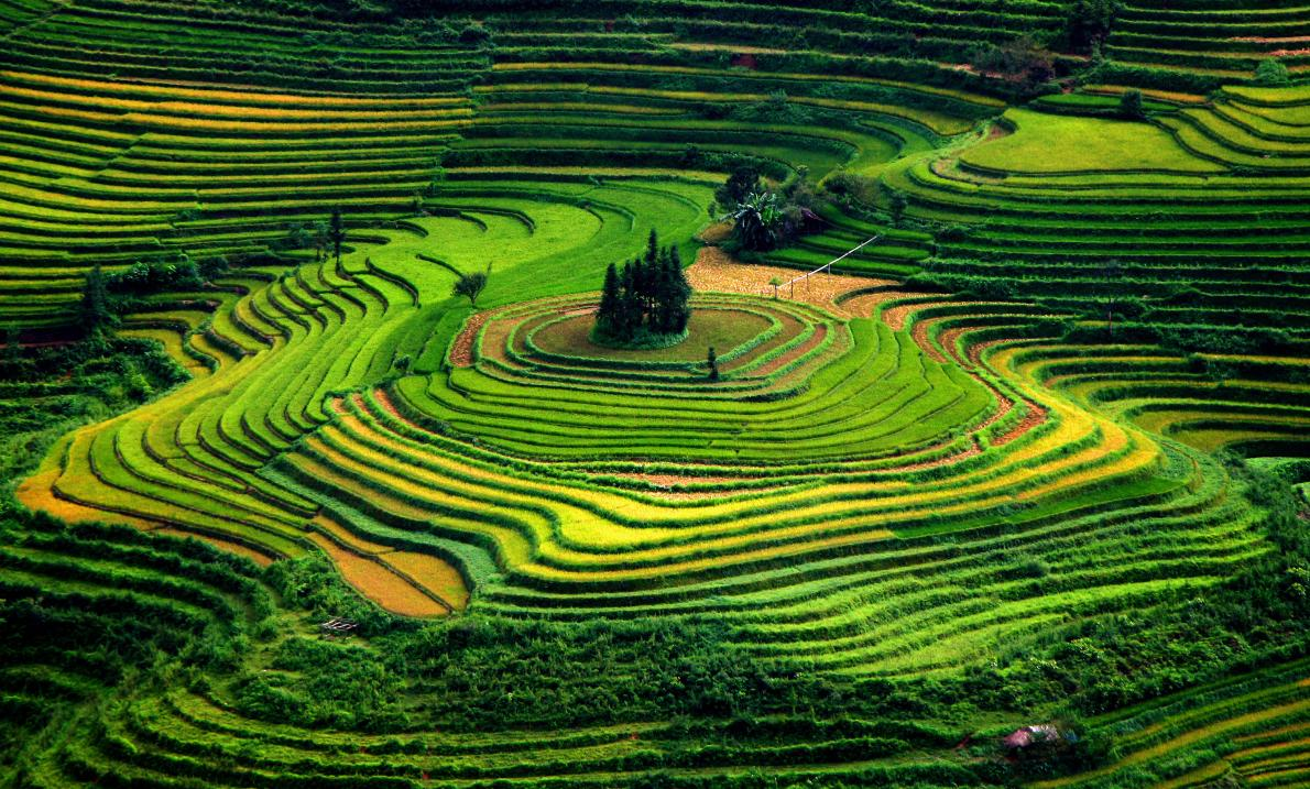 green-terraced-fields-vietnam-foto
