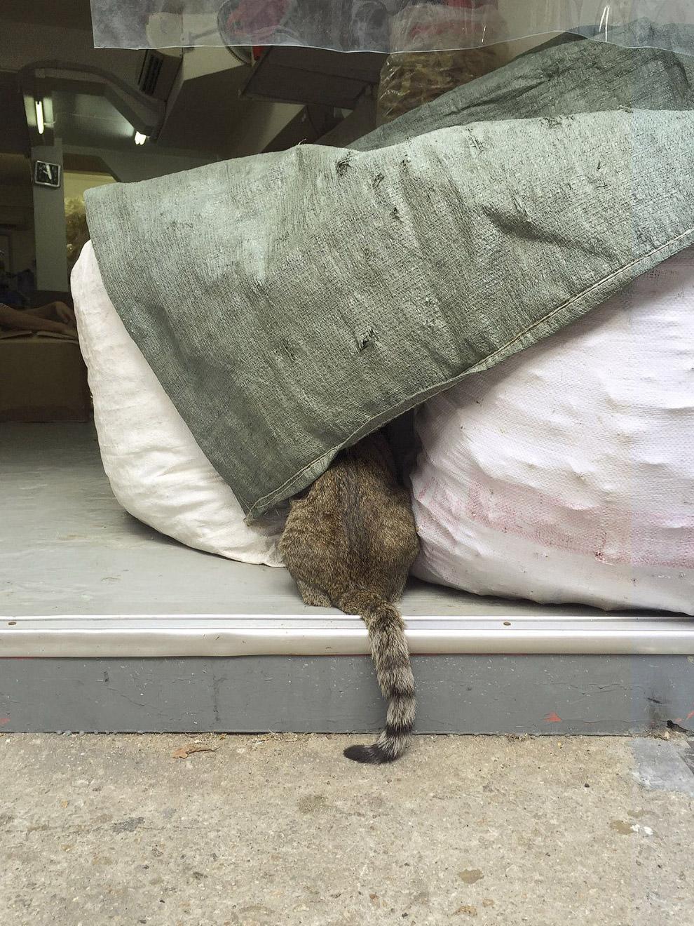 Shop-Cats-Foto