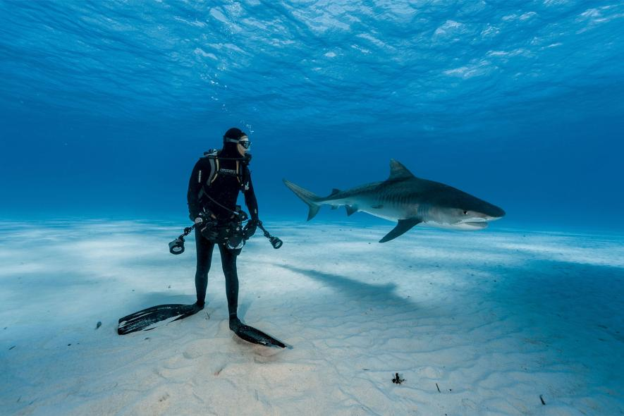 best-underwater-photos-2016