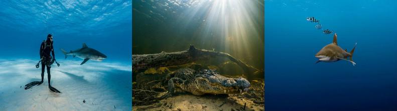 Лучшие фото подводного мира от National Geographic 2016 года