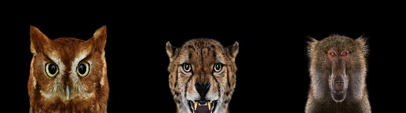 Африканские животные в портретах Брэда Уилсона