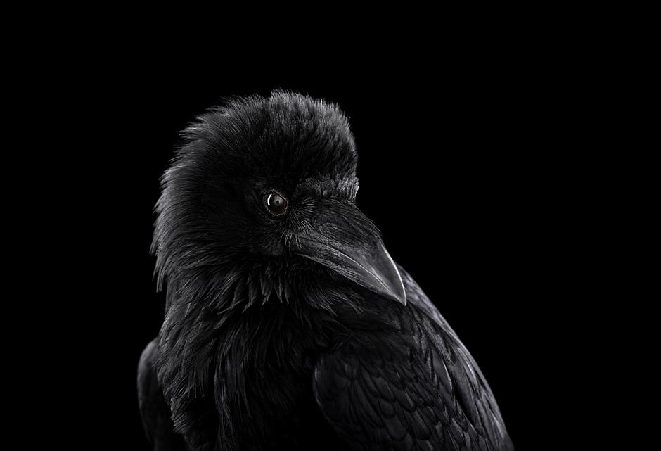 foto-zhivotnyh-bred-uilson