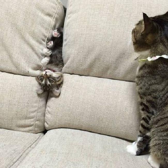 А некоторым котам вообще не обязательно быть в образе. Главное - быть самим собой...