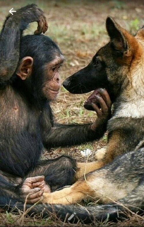 Обезьнки также общаются с другими животными