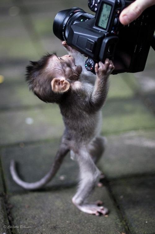 Питают слабость к фотоаппаратам