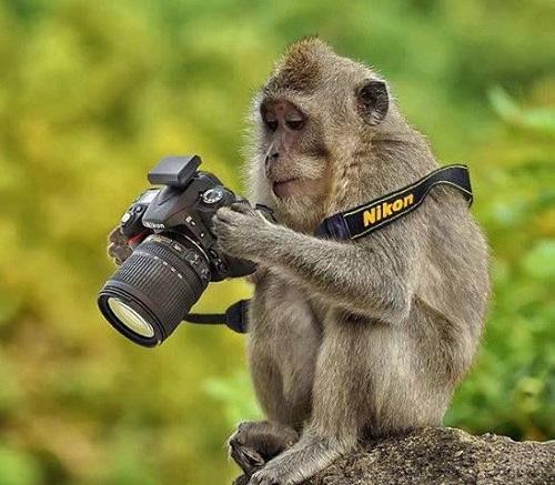 Фотоаппарат - слабость обезьянок