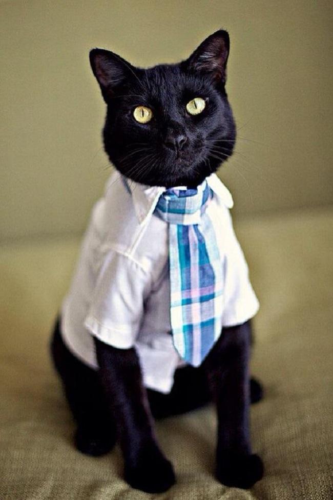 Интеллигентный образ для кота доцента кафедры