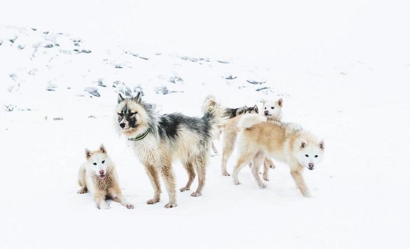 Исландские фото очень красивые