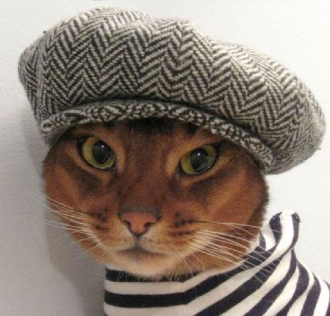 """В кепке от кутюр ваш любимый котик будет напоминать группу """"Бутырка"""""""
