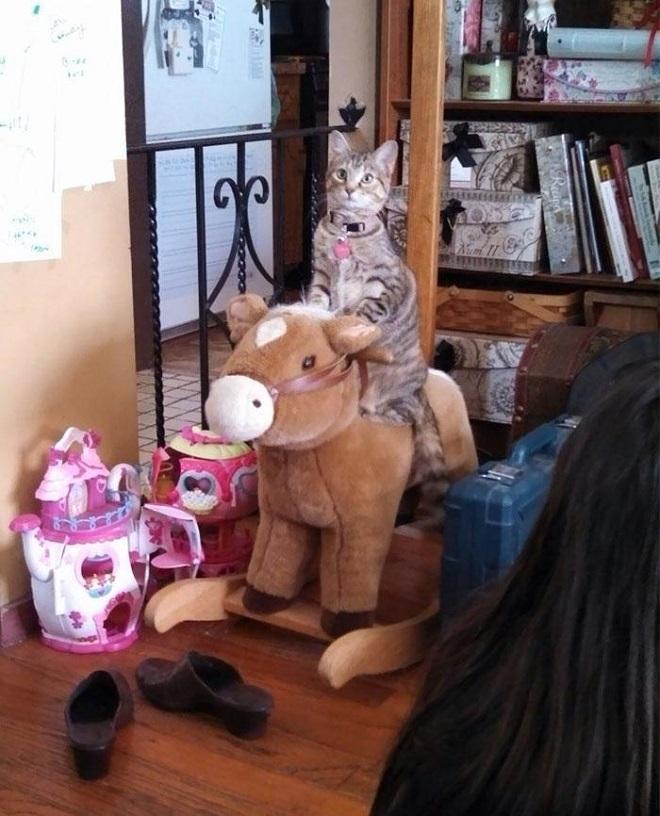 После того, как этот увидел детей, играющих лошадью, решил и сам поиграть. Пока никто не видит, и дети не пришли